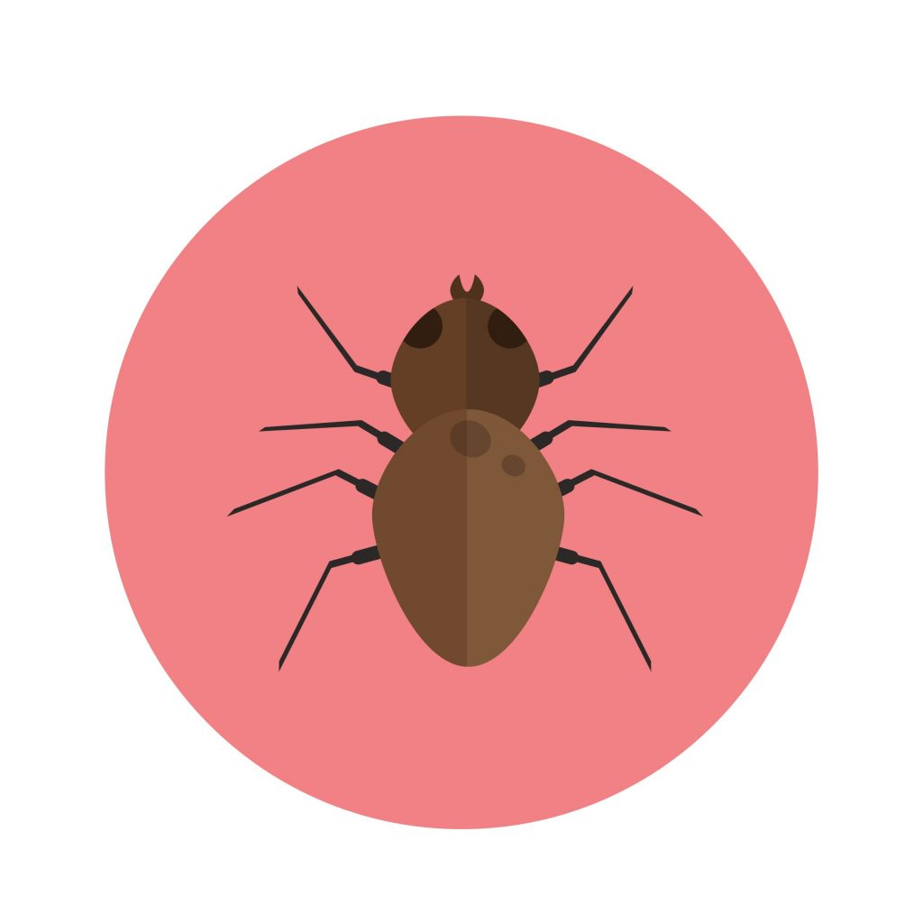 Best Bed Bug control