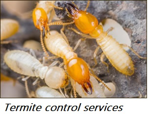 Termite control Working Progress