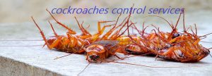 Cockroach control services in Dhaka