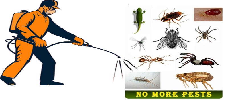 Termite control services in Dhaka